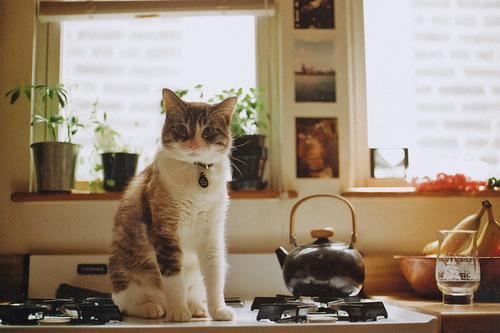 Топ 10 ресторанов кошачей кухни